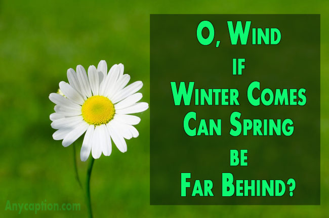 Short-spring-quotes-for-photo-captions